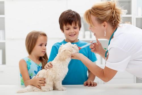 Vaccinations Colorado Springs, CO